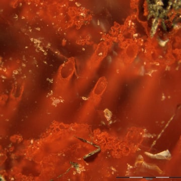 Image: Hematite tubes from the NSB hydrothermal vent deposits
