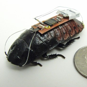 image: cockroach cyborg