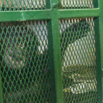 Image: Tommy, a chimpanzee in his late 30s, was kept in a cage behind the Circle L Trailer Sales in Gloversville, New York