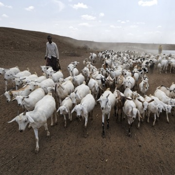 Image: A herder drives his animals away after watering them at one of the few watering holes in the area