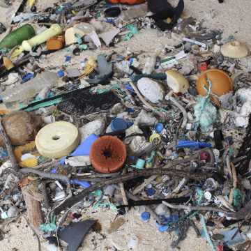 Image: Plastic debris is strewn on the beach on Henderson Island