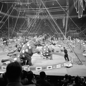 Image: Elephants and dancers go through their paces in opening stages of first night of the Ringling Brothers