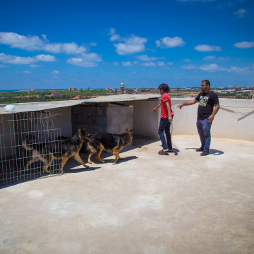 Image: Mouin al-Awad, right, keeps his dogs on the roof of a friend's building