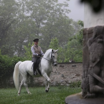 Image: A person riding a Lipizzan stallion