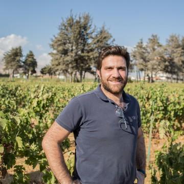 Image: Domaines des Tourelle Vineyard