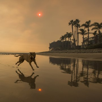 Image: A smoke-filled sky filters orange light around a dog on the beach