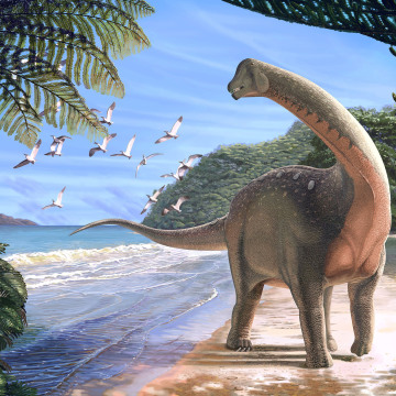 Image: Artist's life reconstruction of the titanosaurian dinosaur Mansourasaurus shahinae on a coastline in what is now the Western Desert of Egypt approximately 80 million years ago is pictured in this handout image