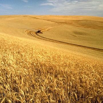 Wheat fields in Eastern Washington