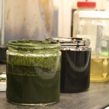 Image of algae, bio-crude, gas