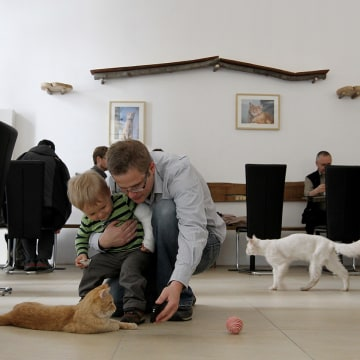 A man and his son play with a cat at the Cafe Neko, in the city center of Vienna on May 7, 2012. Neko, which means cat in the Japanese language, is th...