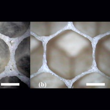 Honeycomb cells start off as circles within the first few seconds of formation (a) and then eventually morph into hexagons (b).
