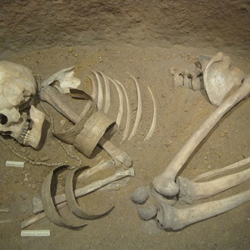 Image: Skeleton