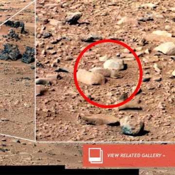 'Mars rat' taking Internet by storm - NBC News