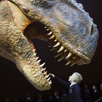 "Eight-year-old Jack Osbourne reaches out to touch the teeth of a moving life-size Tyrannosaurus Rex dinosaur during a press launch of ""Walking with Di..."
