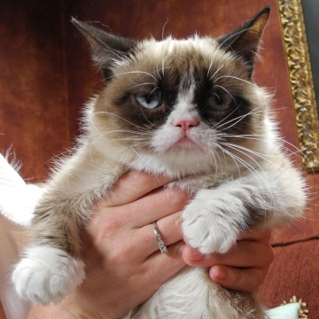 "Tardar Sauce aka ""Grumpy Cat"" on the set for her cameo appearance, ""Will Kitty Play With It."""