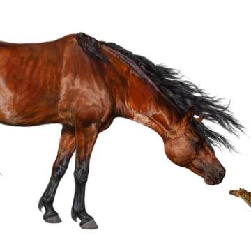 Image: Horse comparison