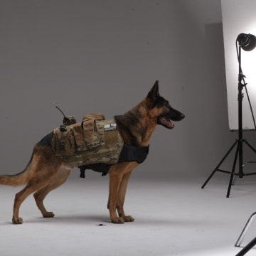 "Ruger, pictured here in the studio, was one of the real-life dogs used to model Riley both in the ""Ghosts"" video game and assorted trailers and short CGI films made to promote the new ""Call of Duty"" game."