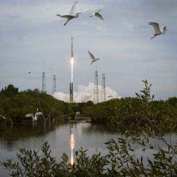 Image: Rocket and birds