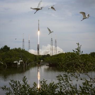Image: Rocket and birds