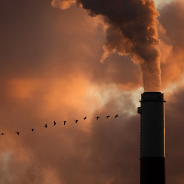 Image of geese flying past a smokestack.
