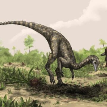Image: Nyasasaurus