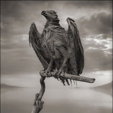 CALCIFIED FISH EAGLE, LAKE NATRON, 2012 -- From Nick Brandt's book Across The Ravaged Land (Abrams 2013)