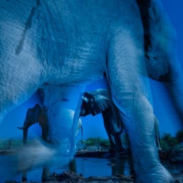 "Image: ""Essence of Elephants"""