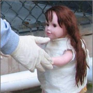 Quite the charmer: Robota doll befriended chimps at the Yerkes National Primate Center.