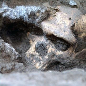Image: Dmanisi skull