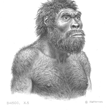 Image: Possible appearance of Dmanisi individual