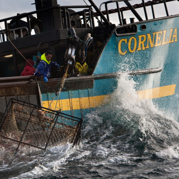 "The red king crab fishery is finally under way now that the government shutdown is over and permits can be issued. Crews, like the one seen in this file photo of the Cornelia Marie from the ""Deadliest Catch"" reality show, are eager to get to work."