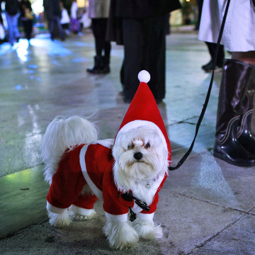 A dog dressed in a Santa Claus costume
