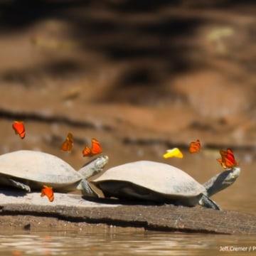 Turtles2