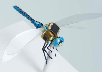 This Cyborg Insect Could Bring Big Advances In Medical Care