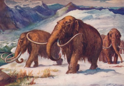 The Surprising Reason This Scientist Wants to Resurrect the Woolly Mammoth
