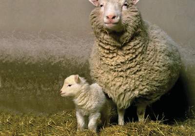 Two Decades After Dolly the Sheep, Here's What We've Learned About Cloning