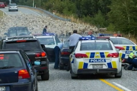 Sheep Help Cops End Wild (and Woolly) Car Chase