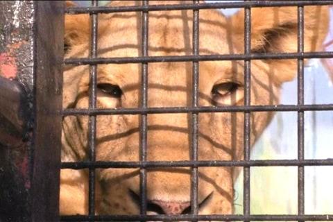 Abandoned 'Status Symbol' Pets Find Refuge in Wildlife Park