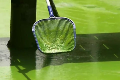 Toxic Algae Emergency Puts Florida Swimmers on Alert