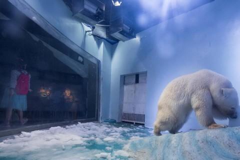 Why Is 'Pizza' Called the World's Saddest Polar Bear?