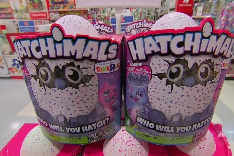 The Hatchimal: This Toy Craze is Taking Over America