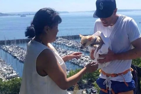 Rock Climber Rescues Chihuahua After Cliff Fall