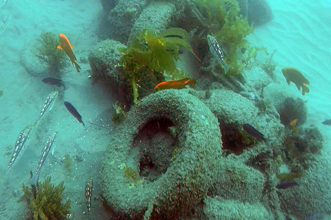 Divers Remove 'Toxic' Experimental Reef off California