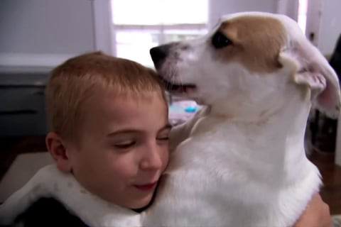 How one boy has helped save over a thousand shelter dogs