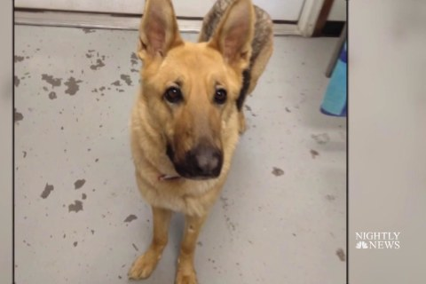Stolen dog found two years later thanks to microchip