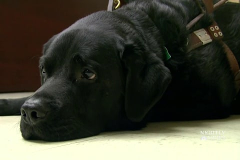 New restrictions proposed for emotional support animals on airplanes