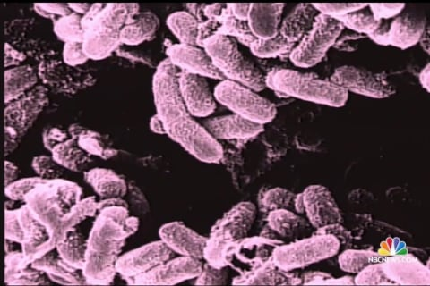 Army Mistakenly Shipped Live Anthrax to Military Labs