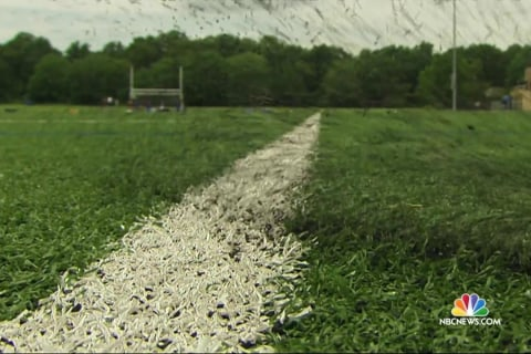 Local Communities Struggle to Evaluate Safety of Popular Artificial Turf