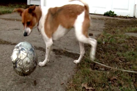 Dog Saves Elderly Neighbor