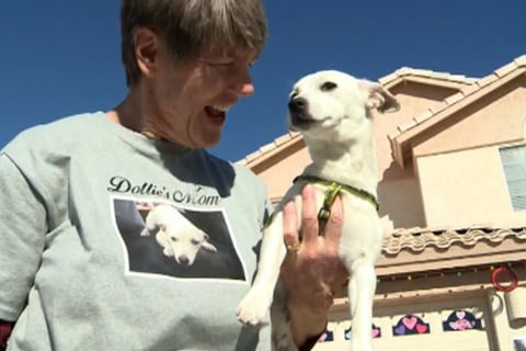 Freeway Puppy Finds A Home